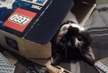 LEGO CATS & CATS N LEGO