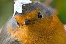 Animals: Birds / Birds, Birdhouses, Bird Art, ... / by Rhonda Gillette