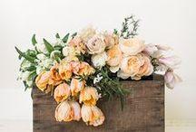 { floral, cactus + succulents } / boho wild flowers, cactus and succulents
