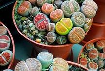 Succulents and other cool plants / by Stephanie Falzone