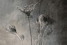 Flora •