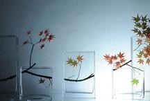 Flora / by Tabitha