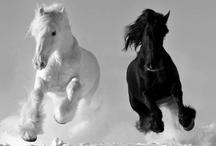 Horse n'round