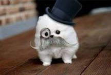 """Cute overload. / Pins to make you say, """"Awwww."""" / by Andrea Alley Photography"""