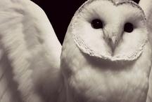 Everything Owls / by ☮☾☼✧Amanda Kraenzle