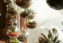 Home Ideas / by ☮☾☼✧Amanda Kraenzle