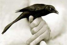 Feathered Friends / by ☮☾☼✧Amanda Kraenzle