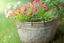 Container Gardening / by Aerie*Earth*Sea