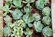 PLANTS-GARDEN-PATIO / Decor/advice for plants, backyards, outdoor spaces, etc. / by Anchiba