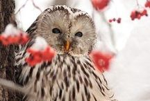 Owls / Nocturnal birds of prey...lovely owls. / by Aerie*Earth*Sea