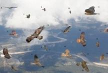 Birds in Napa Valley