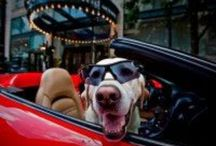 Pet Friendly Locations / Parks, hotels, etc which welcome pets as well as people. / by Penny Tuttle