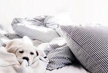 Beds & Pets.
