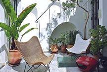 Tropicalize it ! / trois plantes faciles et deux accessoires pour une ambiance tropicale sur son balcon ou sa terrasse. Plantes d'intérieur, vacances,
