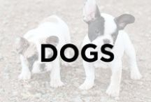 Dogs / Dogs, cute puppies, adult dogs, funny dogs, sleeping dogs, funny dogs, lovable dogs, pups, puppies, furry best friends.