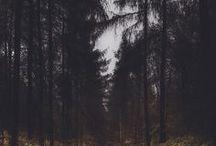 Dark Forest / Romantic dark forests. Forest folklore.