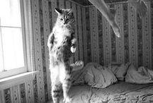 General — Cat Lady