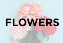 Flowers / Field of flowers, peonies, roses, gardens, pretty colors, sunflowers, planting, flower pots, bouquets, leaves, florals.