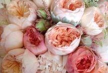 Fascinating Florals