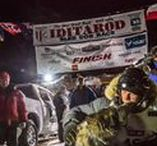 Iditarod 2015 / Pictures pinned somewhat chronologically. Start at the bottom if you want to see the race in the right order.