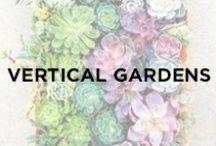 Plant Walls / Vertical Gardens / Greenery, Terra-cotta pots, gardens, greens, plants, plant walls, indoor garden.