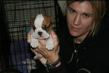 Kathy Kaehler's Love of DOGS! / Labs and more Labs.  Now one Lab and an English Bulldog, but I want more...
