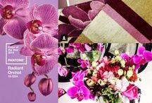 Para a casa / Para quem ama decoração de interiores, cores, objetos,...