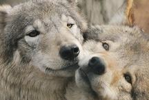 Beautiful Wolf / by Laura McQuillen