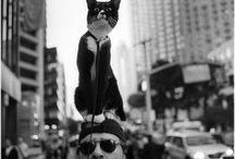 Animals / by Jaime Parker-Center