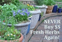 """""""Time is an herb that cures all Diseases.""""  / Quote by Benjamin Franklin  This is my Herb Garden 2013 Planning Board"""