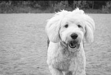 PETS: Love Old English Sheepdogs! / I am an Old English Sheepdog nut. My sheepdog is Bob.