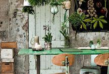 Home: Indoor Plants; Indoor Garden