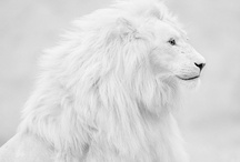 White on White / by Shelley Gentry