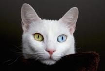 Heterochromia / by Shelley Gentry