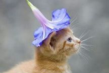 CATS / catscatscatscatscatscatscatskittenscatscatscatscats