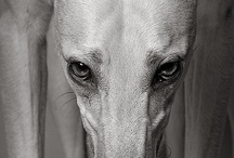 hounds / by Claire Earle