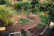 Garden: Ideas & Inspiration