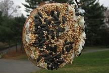 Preschool Crafts--bird feeders / by Debbie Eudy
