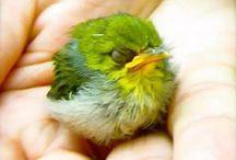 animals : birds