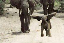 animals : wild