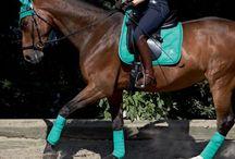equestrian : riding