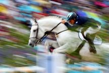 equestrian : jumping