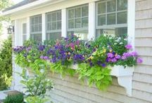 Deck, Patio, Backyard and Exterior Home Ideas / Deck, Patio, Backyard, Exterior Home / by Inspiring Hearts & Homes