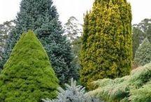 Landscape arc. planting