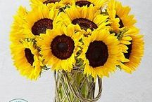 Sunflowers / Sunflowers bring the beauty of the outdoors indoors from traditional yellow to fiery red.