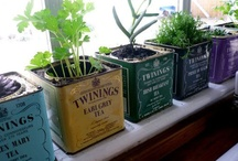 BE GREEN / I love gardening, nature, succulents, house plants.... If it's green or is related to recycling, it's here.  / by Stephanie Amos