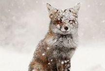 Zima Zima Zima