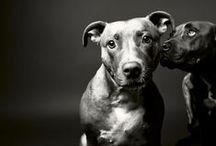 BUCKET LIST (+ animals I want)  / by Maddie Jensen