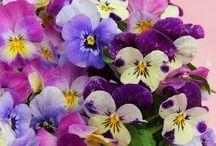 Blossoms / by shop bluegrass