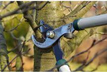 Gardening tips / How to's, garden tips, etc / by shop bluegrass